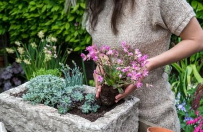 Ruski Doktor Tvrdi Izbacite Bolest Sadeći Ovo Cveće